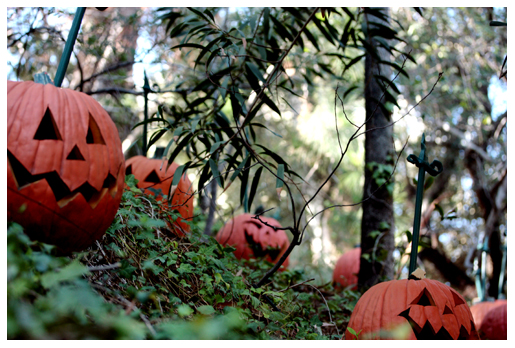 pumpkins outside the haunted mansion